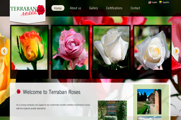 Terraban Rose