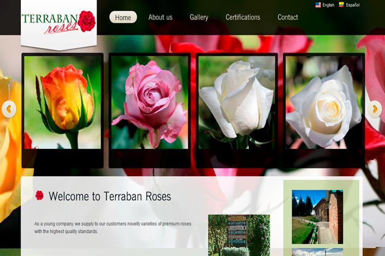 Terraban Rose